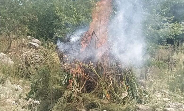 Photo of Qusarda yaban halda bitən çətənə kolları məhv edilib
